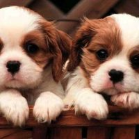 26 Unbelievable Facts About Dogs